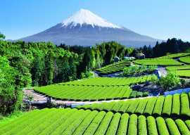 The Land and Sacred Places Japan Tour Itineraries